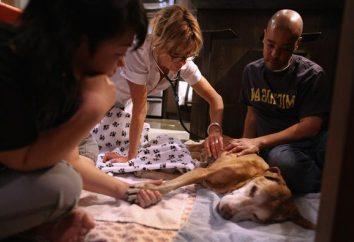 Jak eutanazji psa?