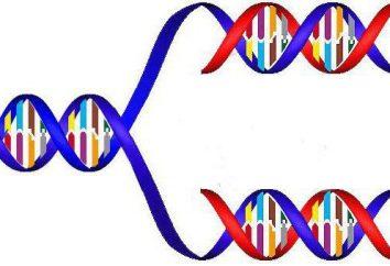 Mutacja jako czynnik ewolucji