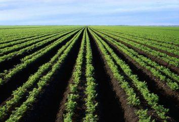 Quando a seminare carote: trucchi e consigli