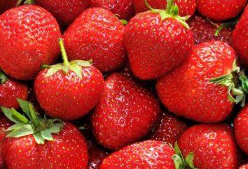 Strawberry Garden. Przydatne właściwości i rośnie