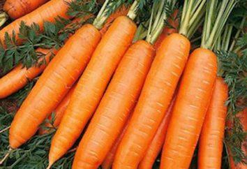 carote Nantes: l'origine della varietà, rendimento, recensioni