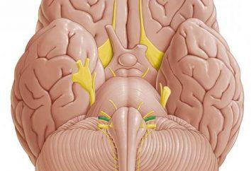 Vestibuläre Hörnerv: Beschreibung, Struktur und Anatomie