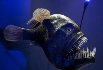 Ryby wędkarz – niesamowity cud natury