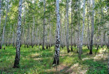 Risorse idriche e forestali della Russia. L'uso delle risorse forestali in Russia