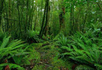 Pas subtropijny: lokalizacja, cechy, flora i fauna