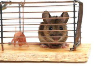 """Pułapki na myszy: od klasyki do """"wściekłości"""""""