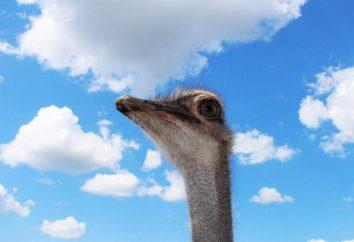 """Avestruz Omsk"" (granja de avestruces, Omsk): modo de funcionamiento, dirección, gira"