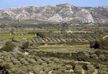 Oliwa z oliwek – oliwa z oliwek