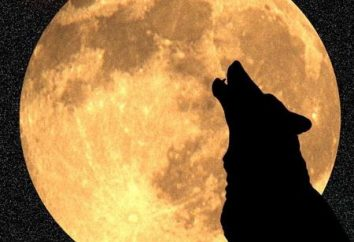 Saiba porque é que os lobos uivam para a lua realmente