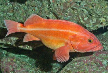peces con aletas de rayos – especie, características generales, la estructura de los peces óseos
