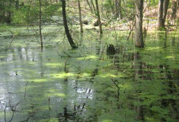 Animales pantanos. ¿Qué animales viven en los pantanos