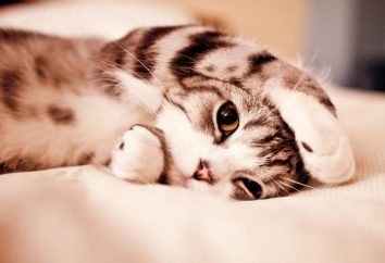 Silne potrząsanie kota: objawy