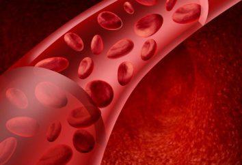 Co zapewnia ciągłość przepływu krwi przez naczynia? Ciągłość i powoduje przepływ krwi