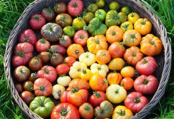 """Tomate """"puzata hut"""": commentaires. Variété de maturation précoce de tomates pour la croissance extérieure"""