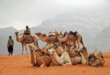 Beduina – un nómada del desierto