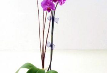 Gelbes Blatt im Orchid – ob zur Sorge?