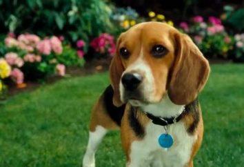 Najlepsze filmy o psach
