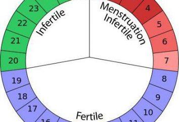 I più sicuri giorni di gravidanza: come calcolare? Il metodo del calendario di controllo delle nascite: giorni sicuri