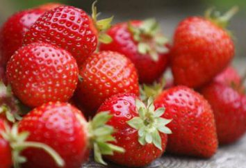Strawberry Cardinal: descrição da variedade e características de cuidado