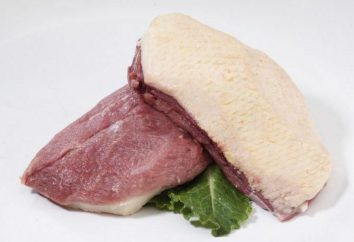Nützliche Eigenschaften und Kalorien Ente