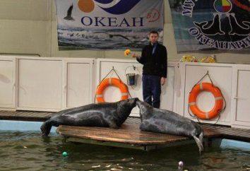 Warum sollte jeder das Aquarium (Murmansk) besuchen