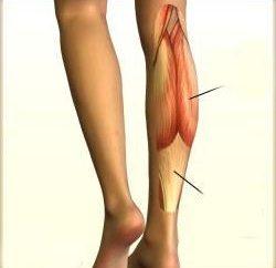 mięśnie łydek, ich lokalizacja, struktura i funkcja. Grupy przednie i tylne mięśnie nóg