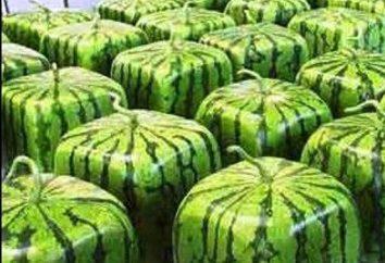 Melon d'eau « lumière ». cultivation