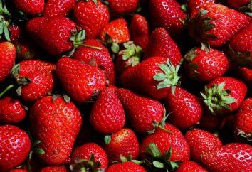 Est-il possible de transplanter des fraises en Octobre et quels soins dont il a besoin?