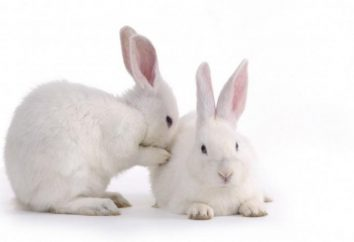 Wie viele Leben dekorative Kaninchen?