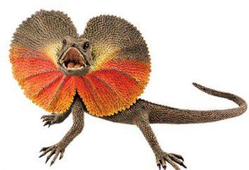 Chlamydosaurus – repelente de Mestre
