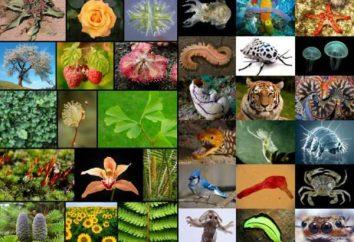 Czym jest taksonomia w biologii? Biologia: systematyka roślin