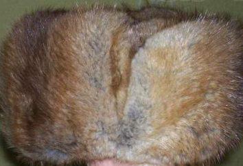 Le légendaire chapeau fauve de renne: quel est-il?