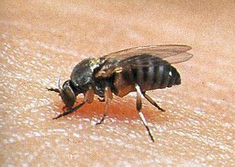 Si la picadura de un mosquito en el ojo, ¿qué hacer? Cómo ayudarse a sí mismo?