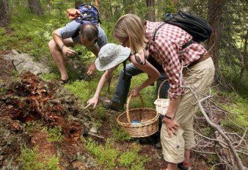 Wiosenne grzyby (zdjęcie). Jakie są nazwy pierwszych grzybów wiosny?