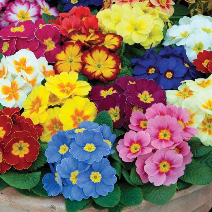 Tipi popolari di fiori un nome e una foto for Tipi di fiori