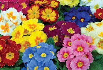 Popularne rodzaje kwiatów: nazwa i zdjęcie