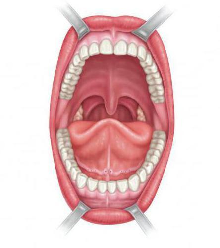 Boca Anatomía: foto
