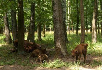 Bison Reserve w Serpukhov. Moscow region, powiat Serpukhov