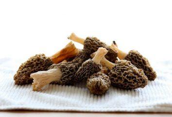 Como cozinhar os cogumelos e usá-los em diferentes pratos, observando as precauções de segurança
