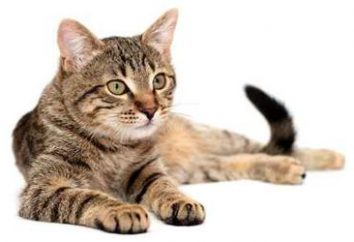 Kilka wskazówek, jak pozbyć się zapachu moczu kota w domu lub mieszkania