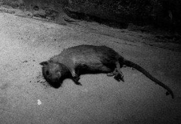 veneno Rat – veneno para ratas