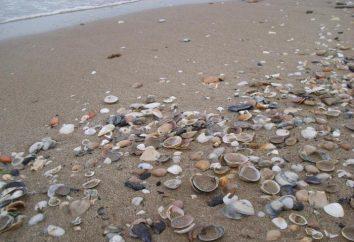 Artigos feitos de materiais naturais: painéis feitos de conchas