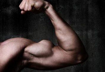 Skuteczne ćwiczenia na biceps w siłowni