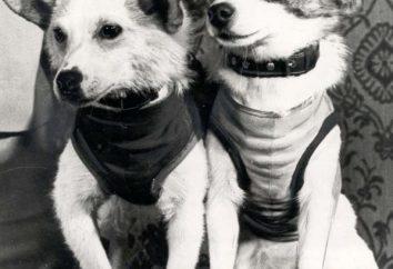 Belka e Strelka – il primo cane nello spazio, che è tornato sulla Terra viva