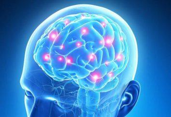 ¿Cómo y por qué los niños EEG?