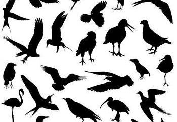 escuadra aves. grupo de aves paseriformes. Las aves de presa: foto