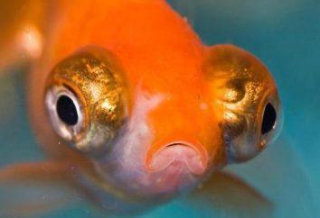 Czy istnieje mózgu u ryb: struktura i funkcje. Co to jest IQ ryby?