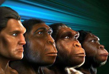 Como nossos ancestrais viveram: um olhar sobre a história