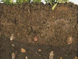 Wir bestimmen die Dichte des Bodens auf dem Garten-Website