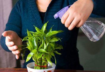 """Nawóz """"Ideal"""" – narzędzie unversalnoe dla rozwoju i wzrostu warzyw, ogród i rośliny doniczkowe"""
